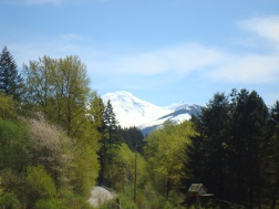 Beautiful view of Mt. Baker from the campgrounds!